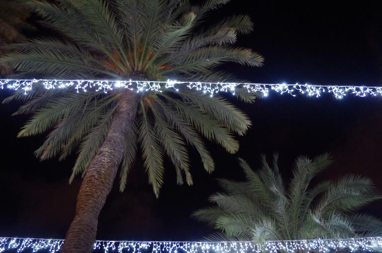 palmier-de-noel